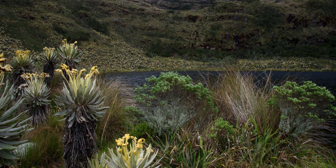 Laguna de Iguaque y Santuario de Fauna y Flora